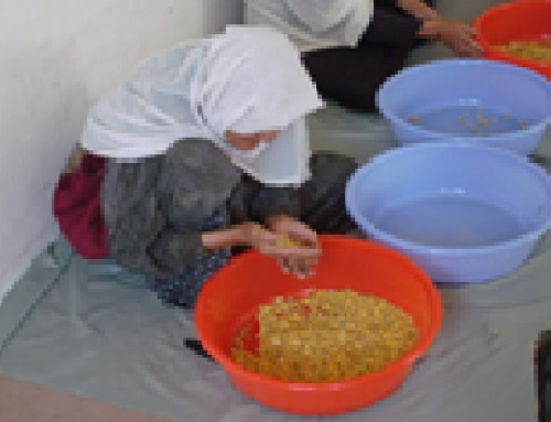 Afghan Women Employment Project (AWEP)